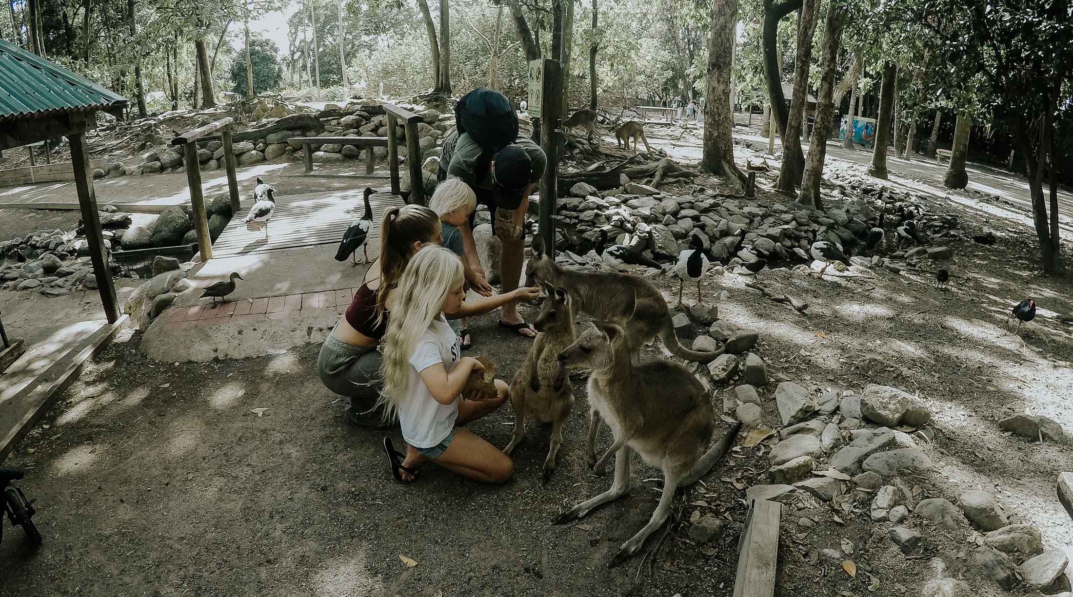 Wildlife Zoo Port Douglas