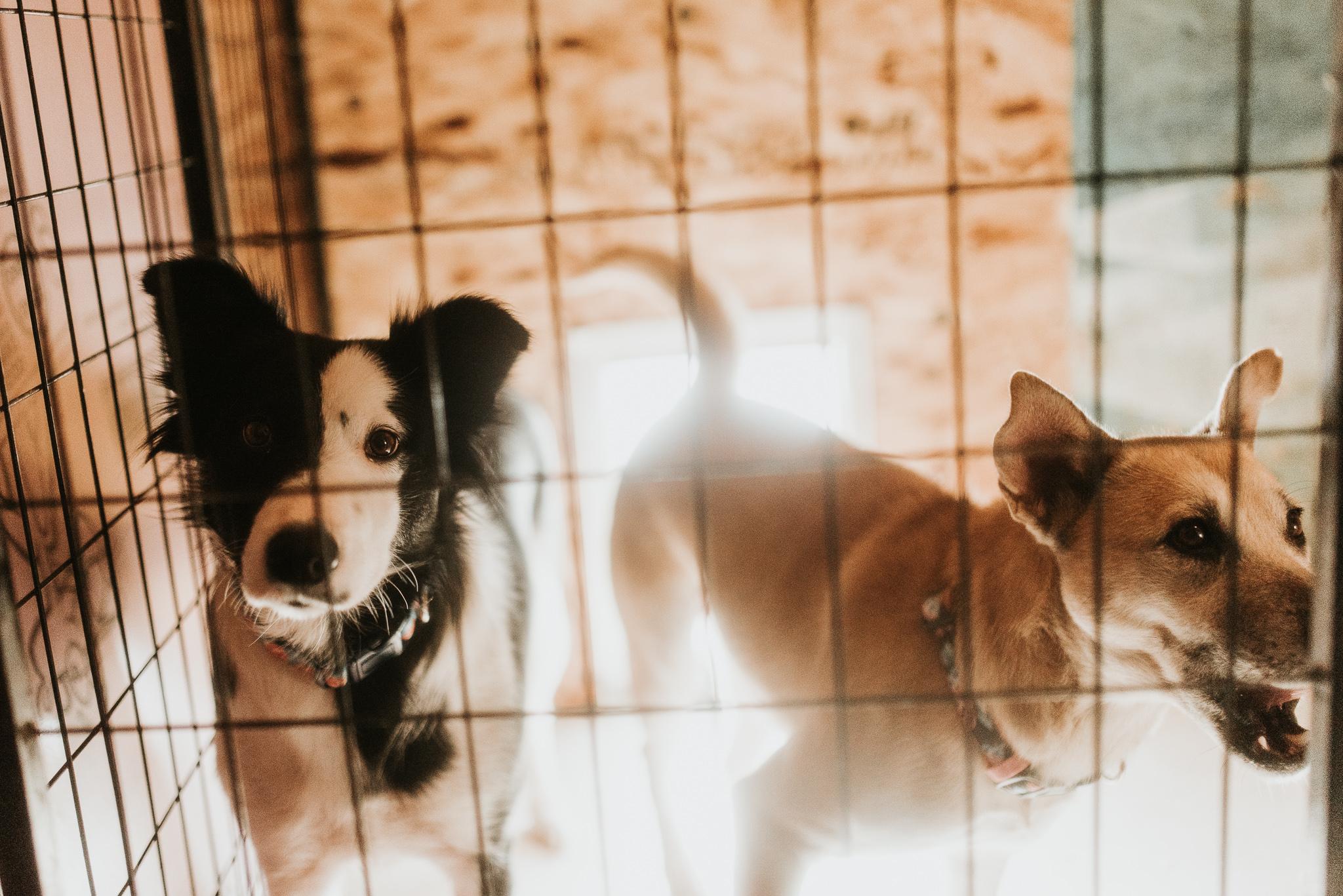 bismarck-mandan-dog-rescue-miles-of-love-98.jpg