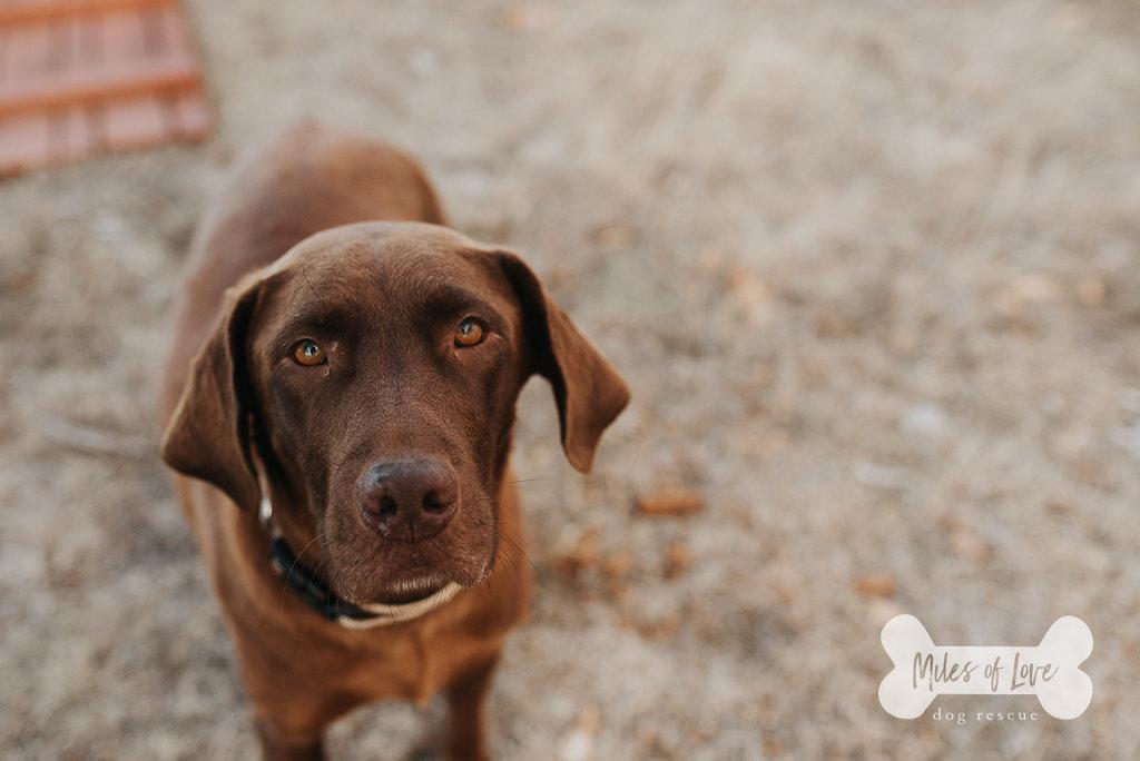 milesoflove_puppies-41.jpg
