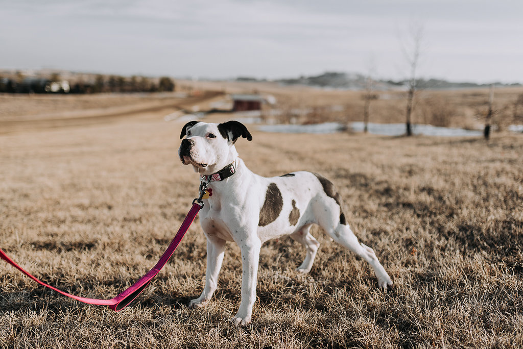 bismarck-dog-rescue-adoption-19.jpg