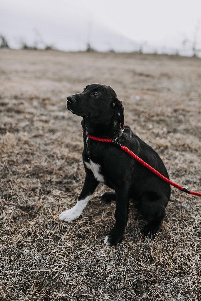 bismarck-dog-rescue-adoption-39.jpg