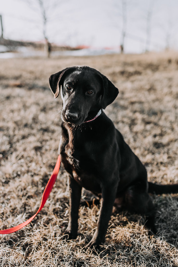 bismarck-dog-rescue-adoption-28.jpg