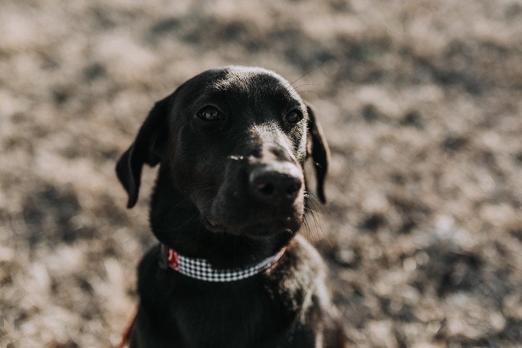 bismarck-dog-rescue-adoption-32.jpg