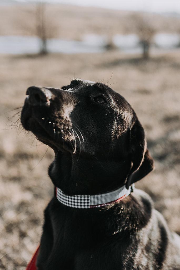 bismarck-dog-rescue-adoption-30.jpg