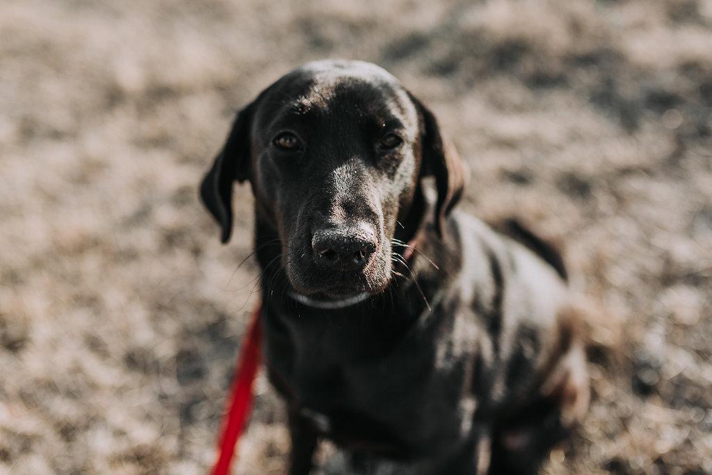 bismarck-dog-rescue-adoption-31.jpg