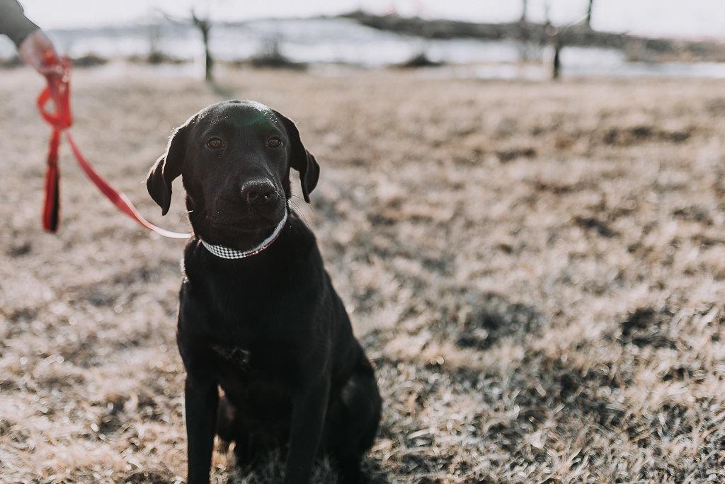 bismarck-dog-rescue-adoption-25.jpg