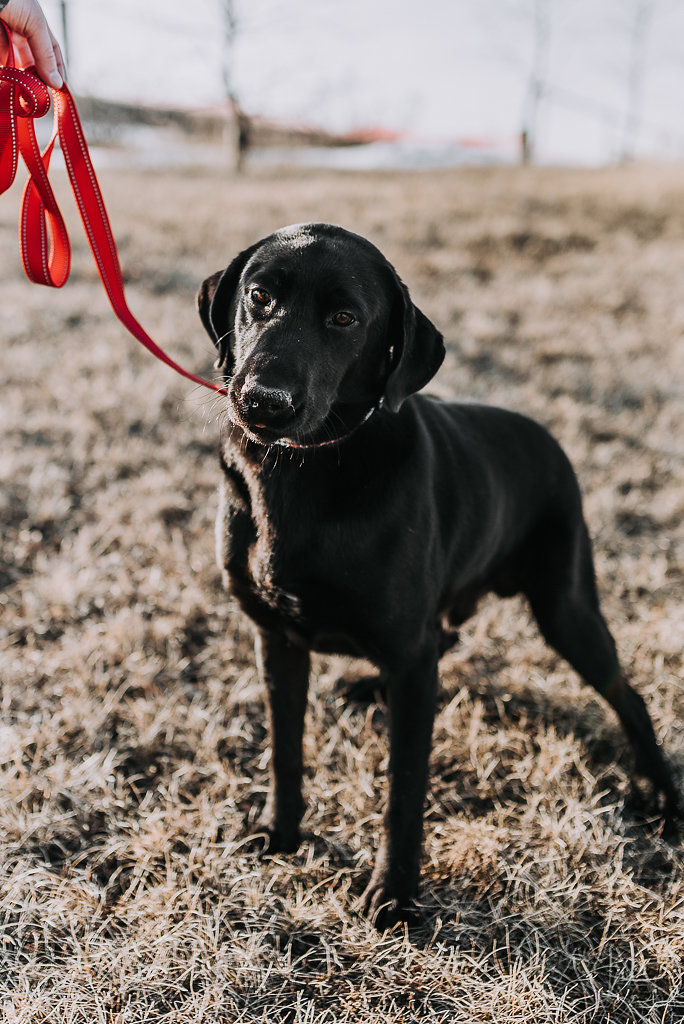 bismarck-dog-rescue-adoption-27.jpg
