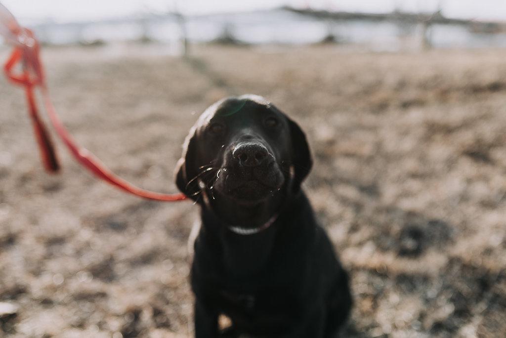 bismarck-dog-rescue-adoption-26.jpg