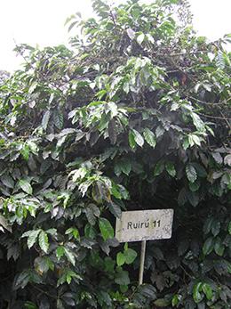 ruiru-plant.jpg