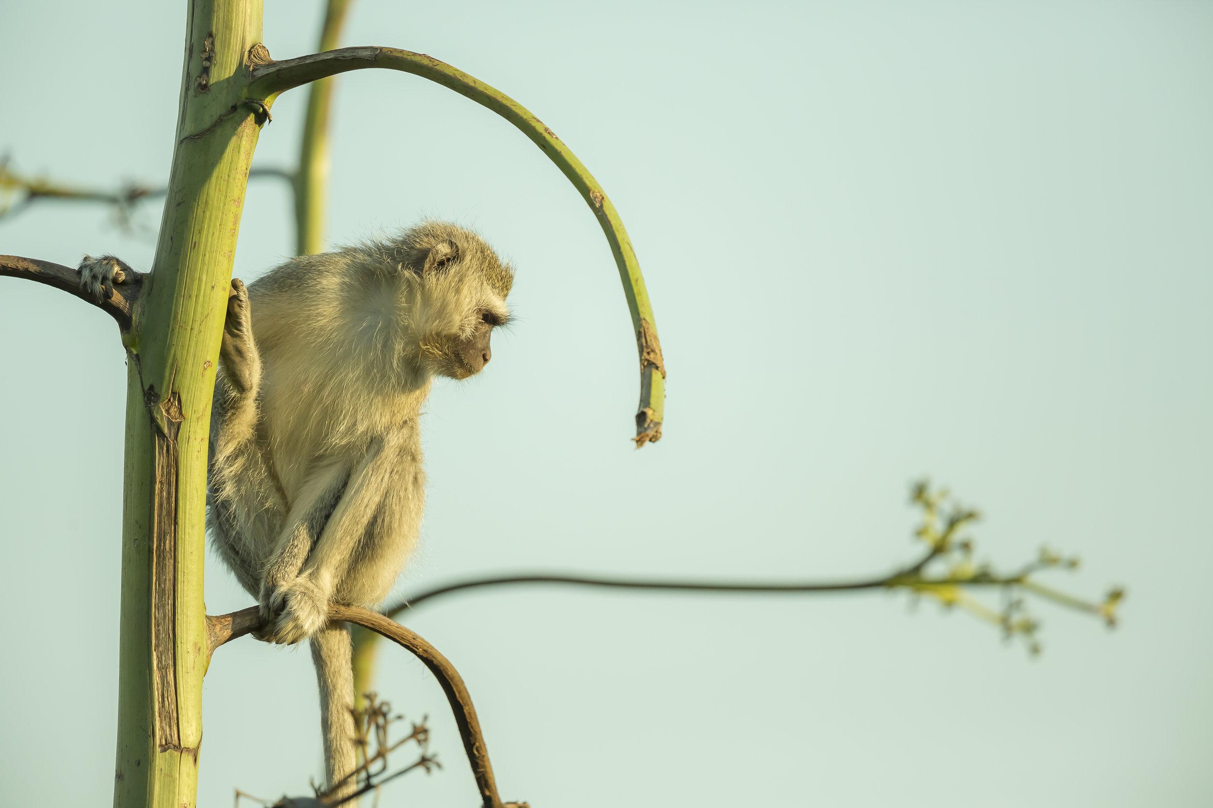 Monkeys-92.jpg