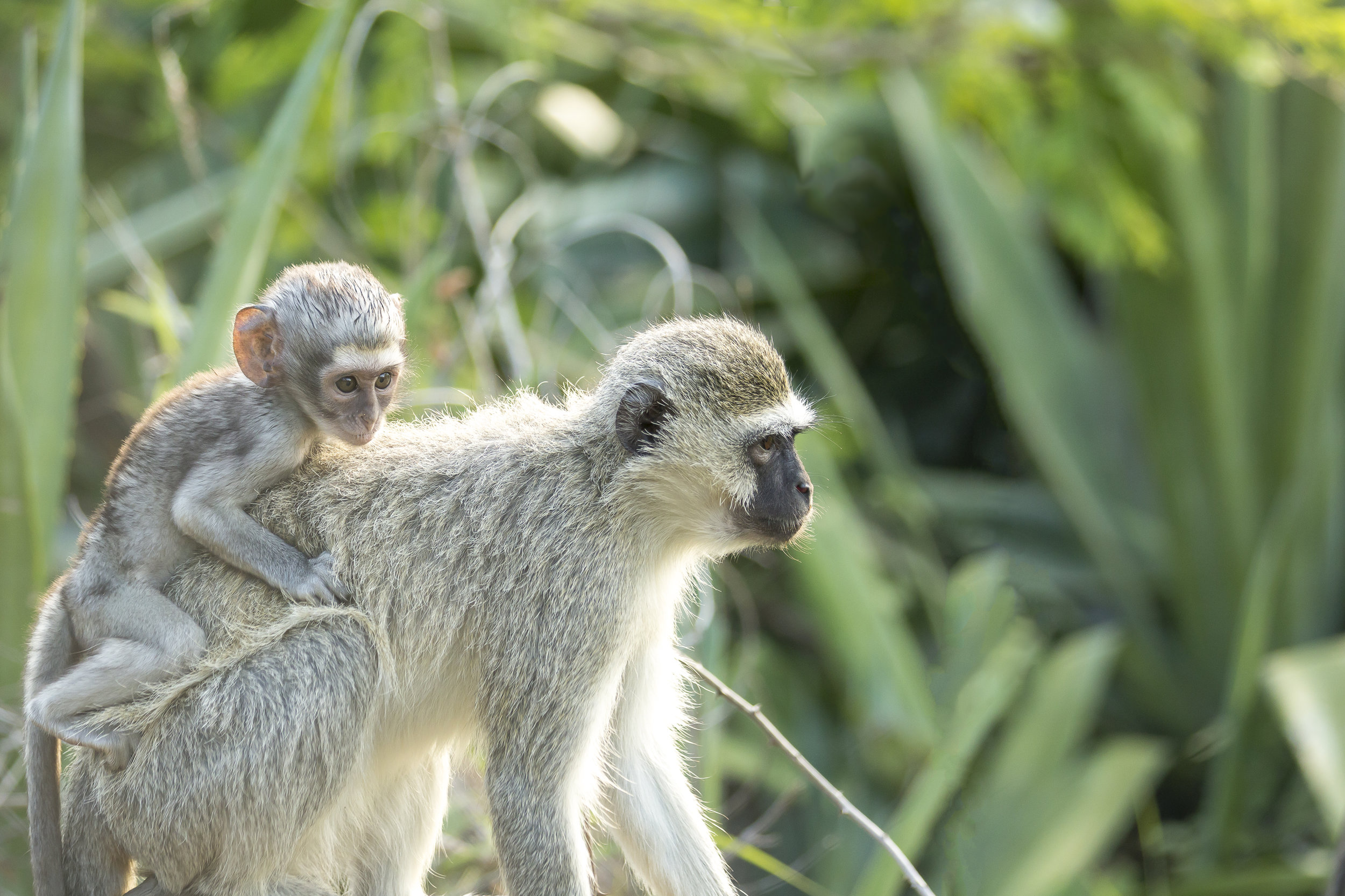 Monkeys-1.jpg