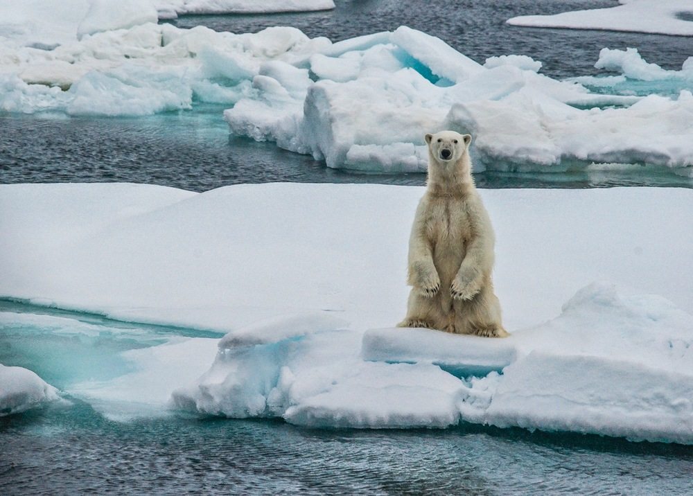 A POLAR BEAR STARES OUT ACROSS AN ICE FLOE IN THE ARCTIC.  PHOTO: CRISTINA MITTERMEIER