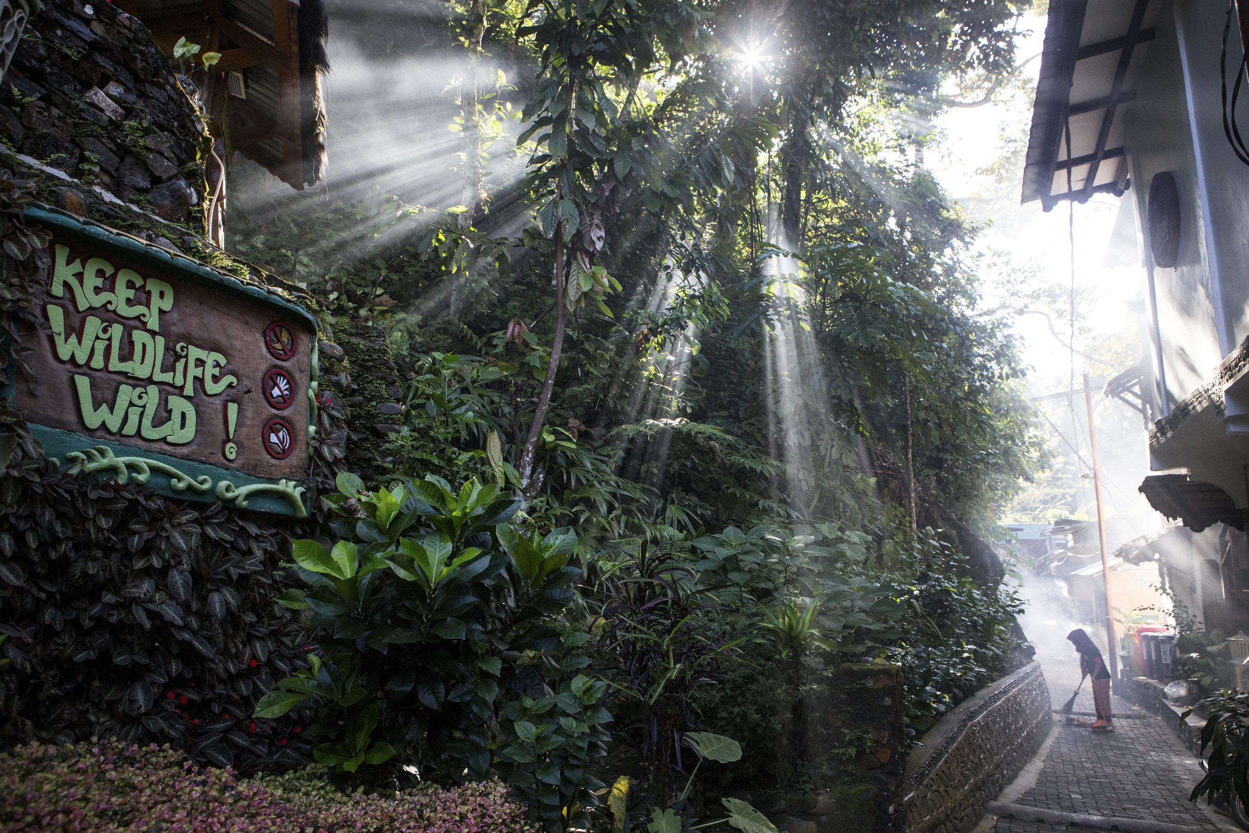 Bukit Lawang, Sumatra.  PHOTO: Matt Stirn