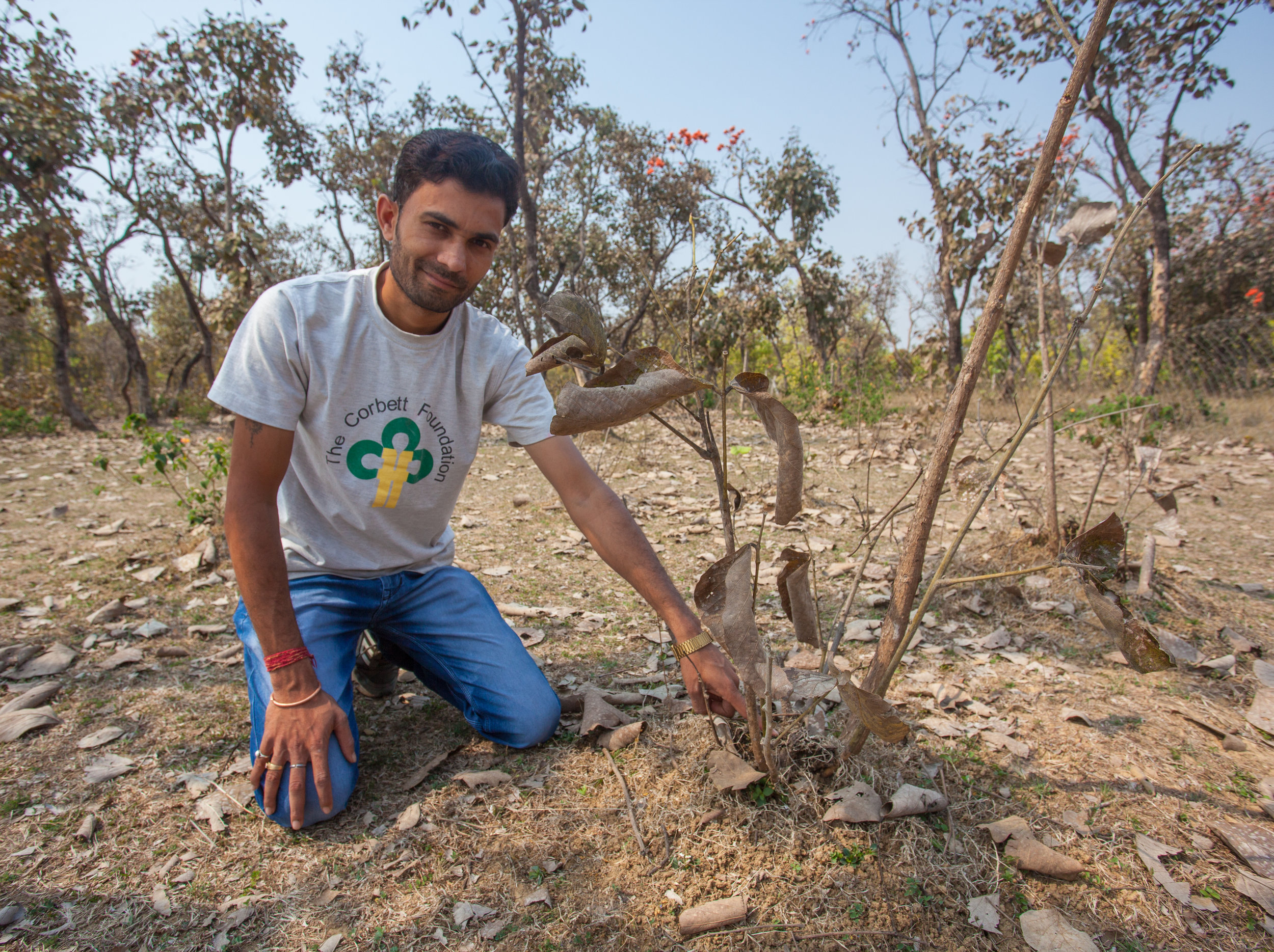 Reforestation projects are fundamental to preserving wildlife habitat.