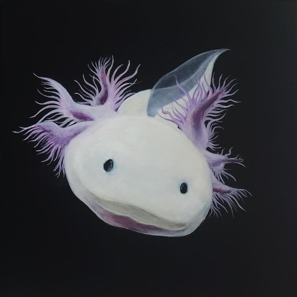 Axolotl 2