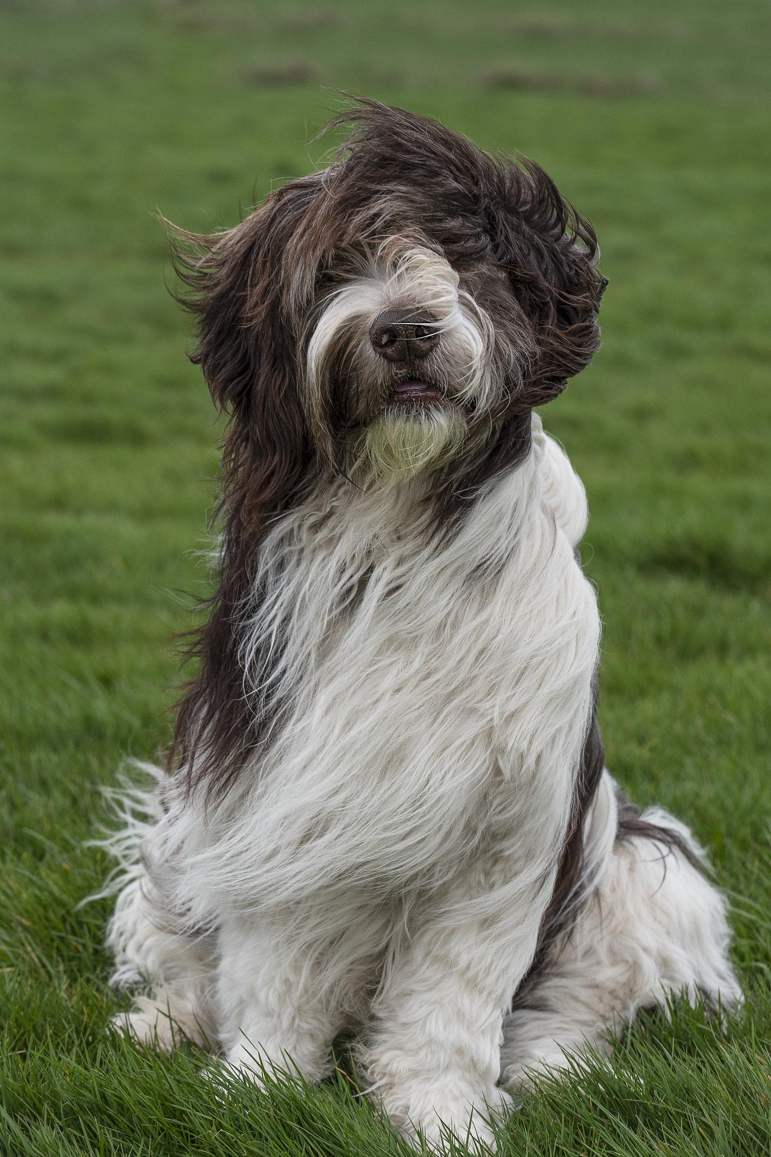 Nieuw Therapiehonden — DogsWork Therapiehonden YX-48
