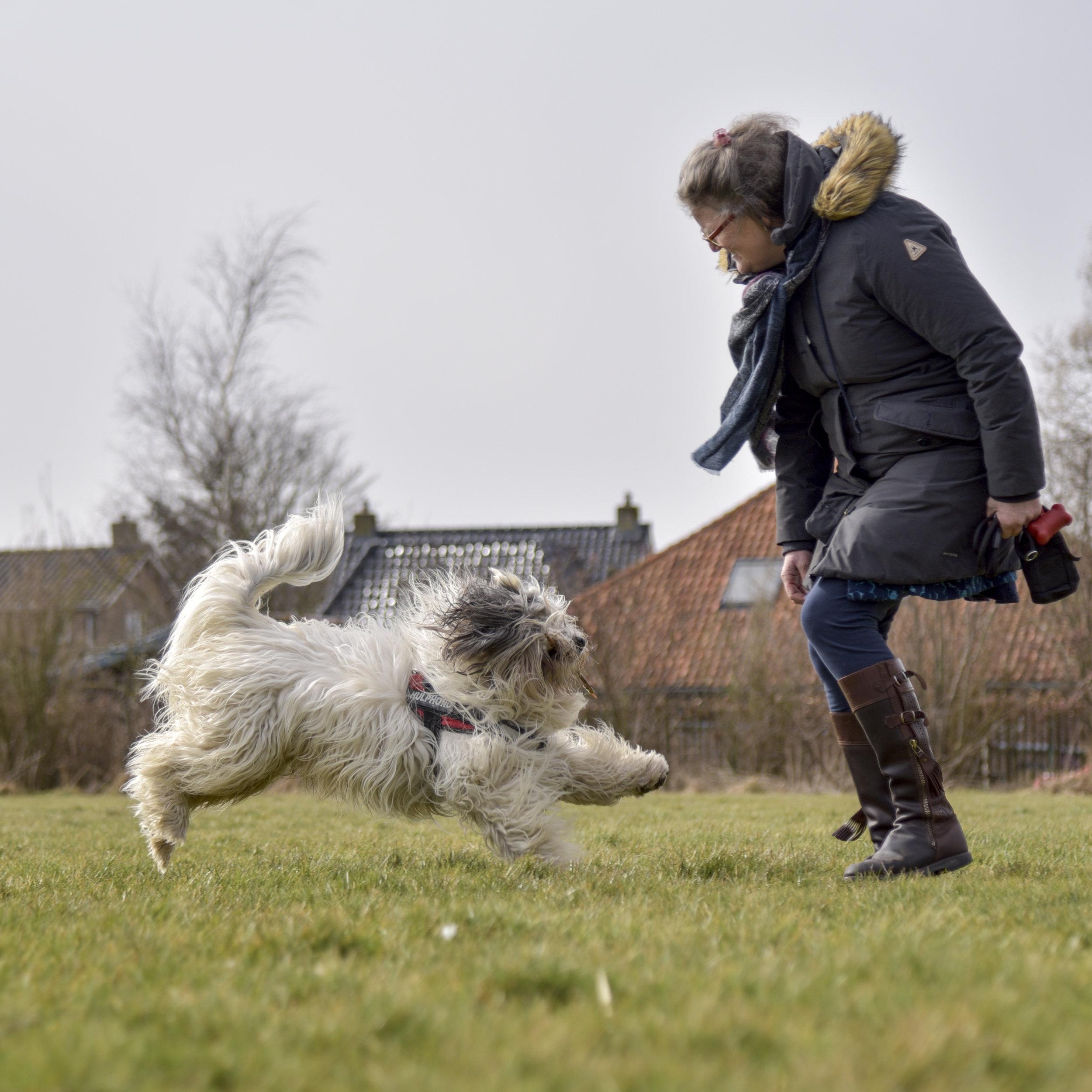 Ervaringen van onze cliënten - DogsWork heeft meer dan 100 therapiehonden opgeleid en geplaatst