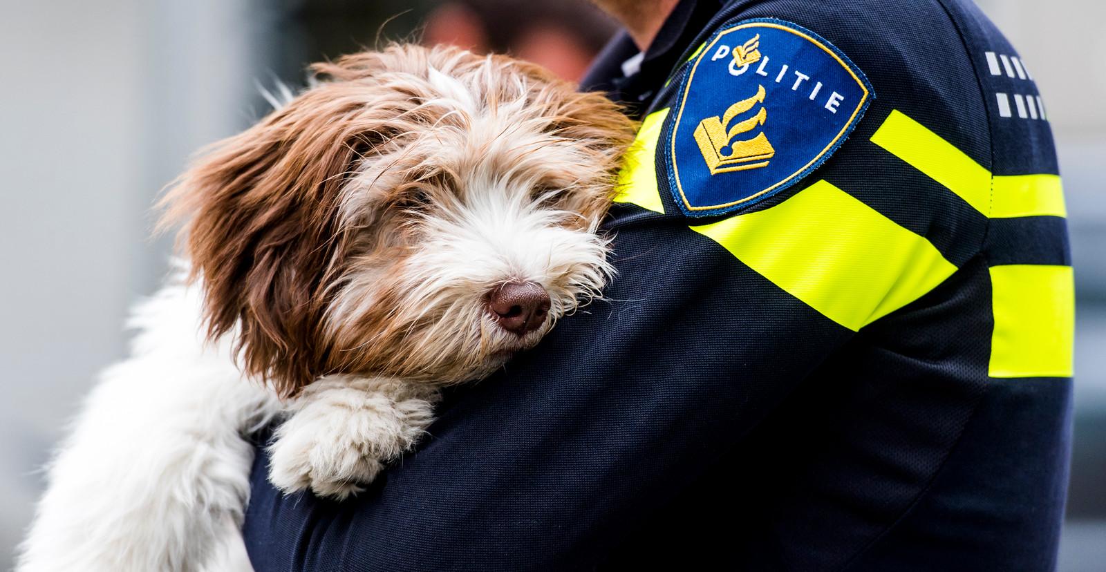 AAI-honden - In samenwerking met DogsWork zet de politie Rotterdam AAI-honden in tijdens overhoringen.