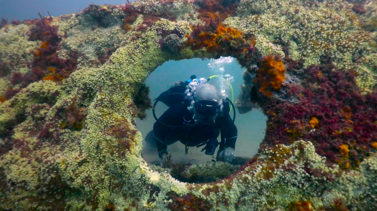 Reefs, Fishing, & Diving in St. Augustine - Area visitors travel from far and wide for a diverse offshore experience, and the stunning St. Johns County coastline does not disappoint.View in Directory
