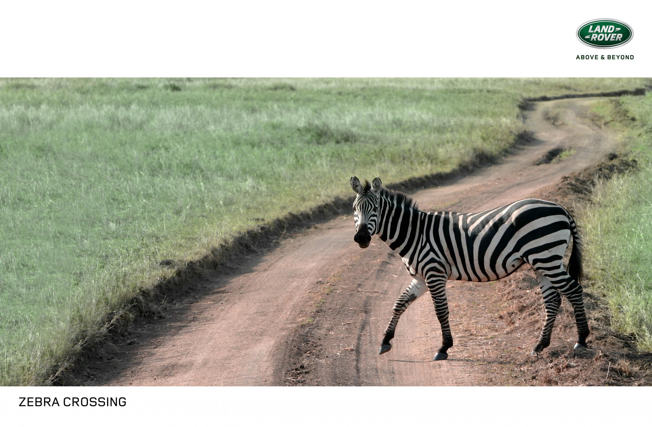 zebra_crossing_0.jpg