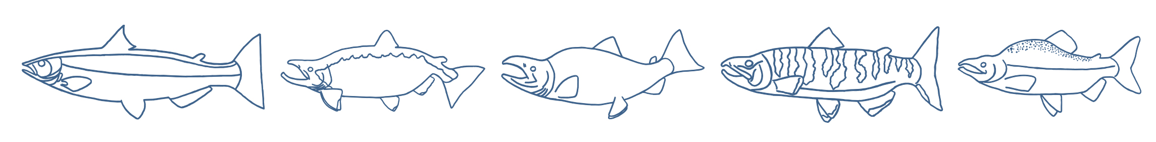 salmon row.jpg