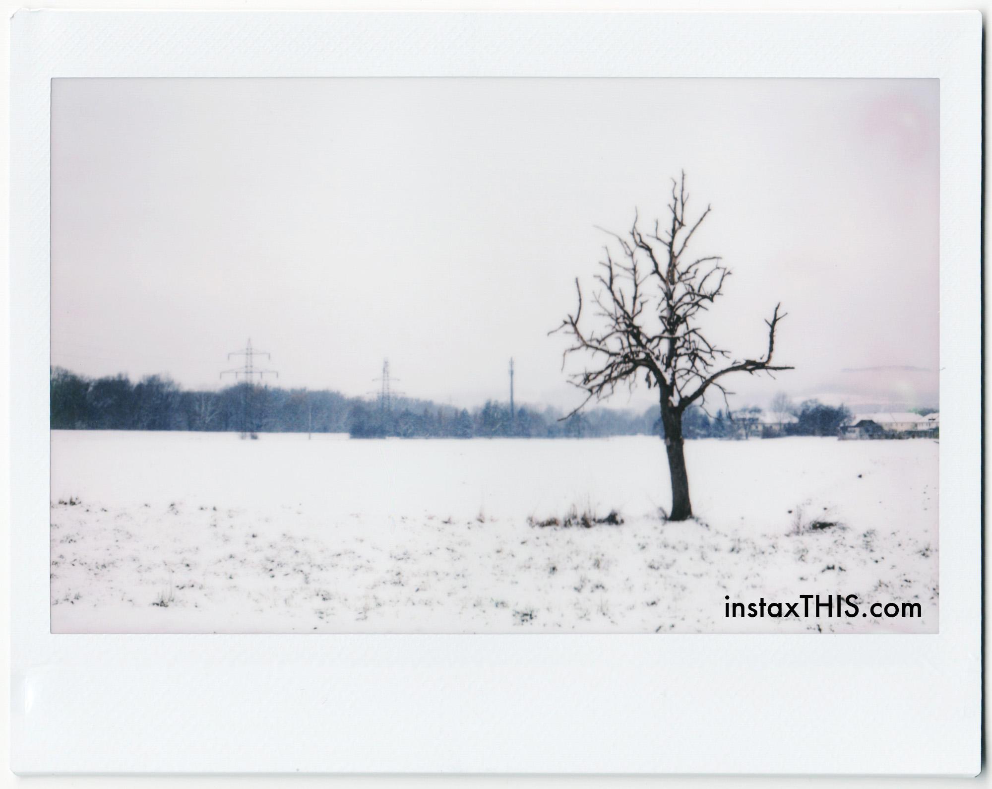 1 Baum.jpg