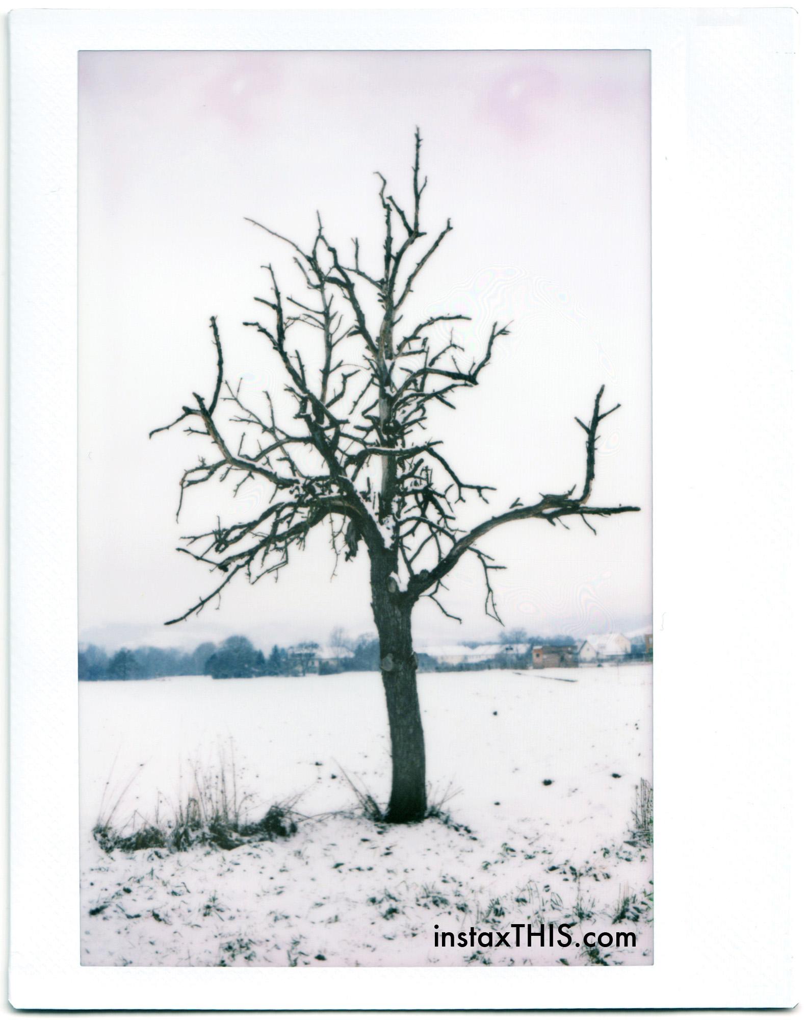 2 Baum.jpg