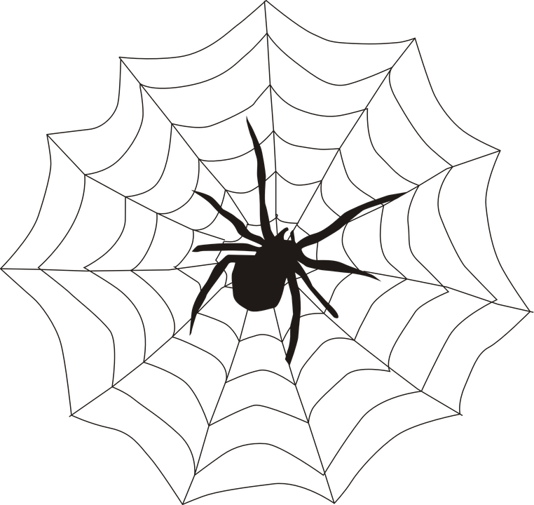 spider-155449_960_720.png
