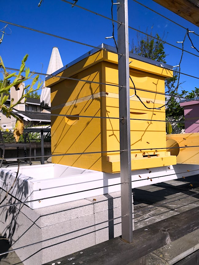 The bee boxes painted with Roman Yellow Sinopia Milk Paint seem to be popular with the tenants