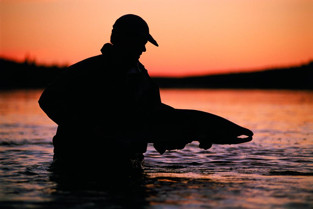 Midnight Atlantic salmon on the Kola Peninsula in Russia