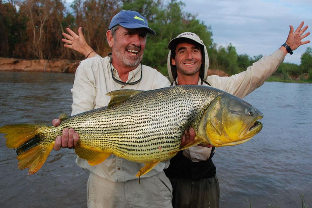 Record dorado on the Rio Juarmento, Argentina