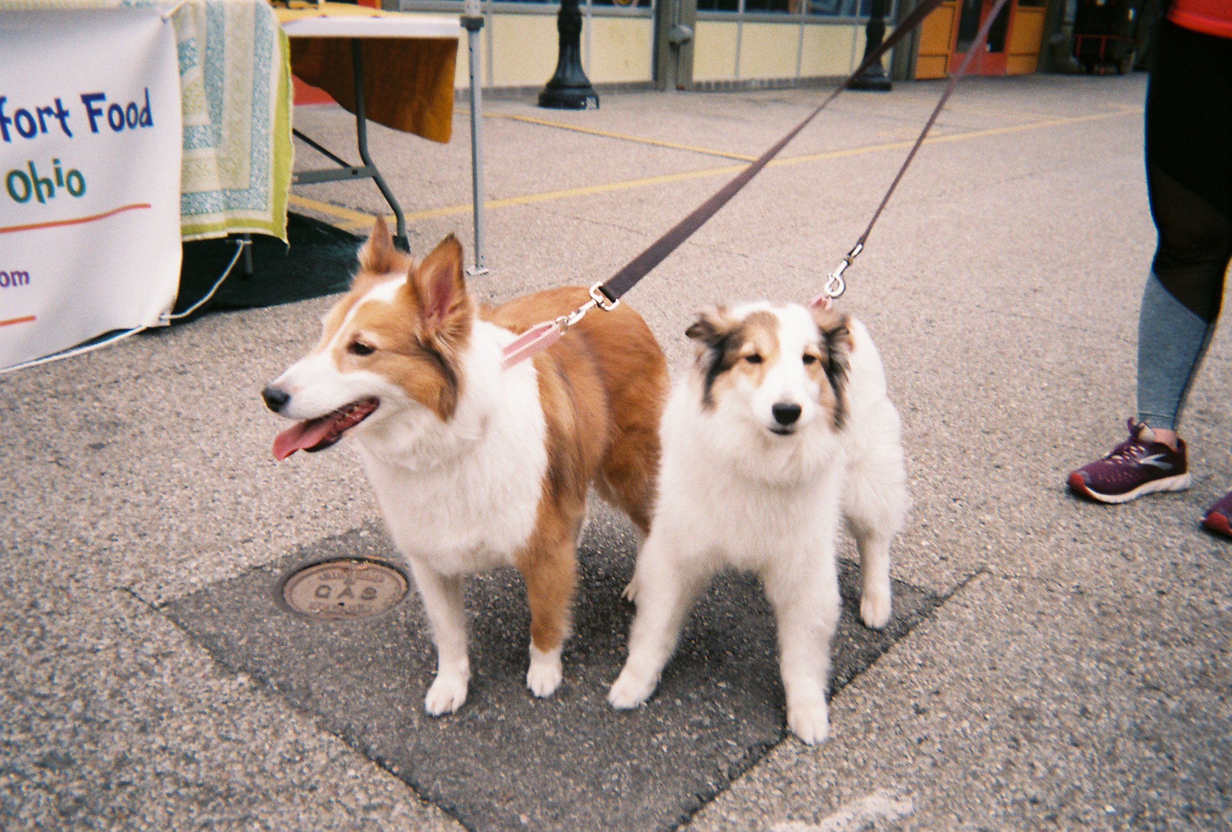 book38-pic20_cutest-dogs.JPG