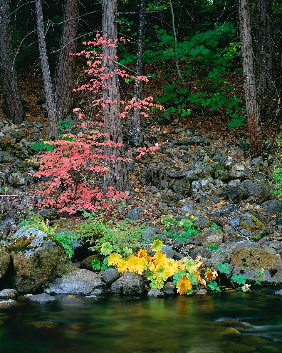 Dogwood and Cedar.jpg