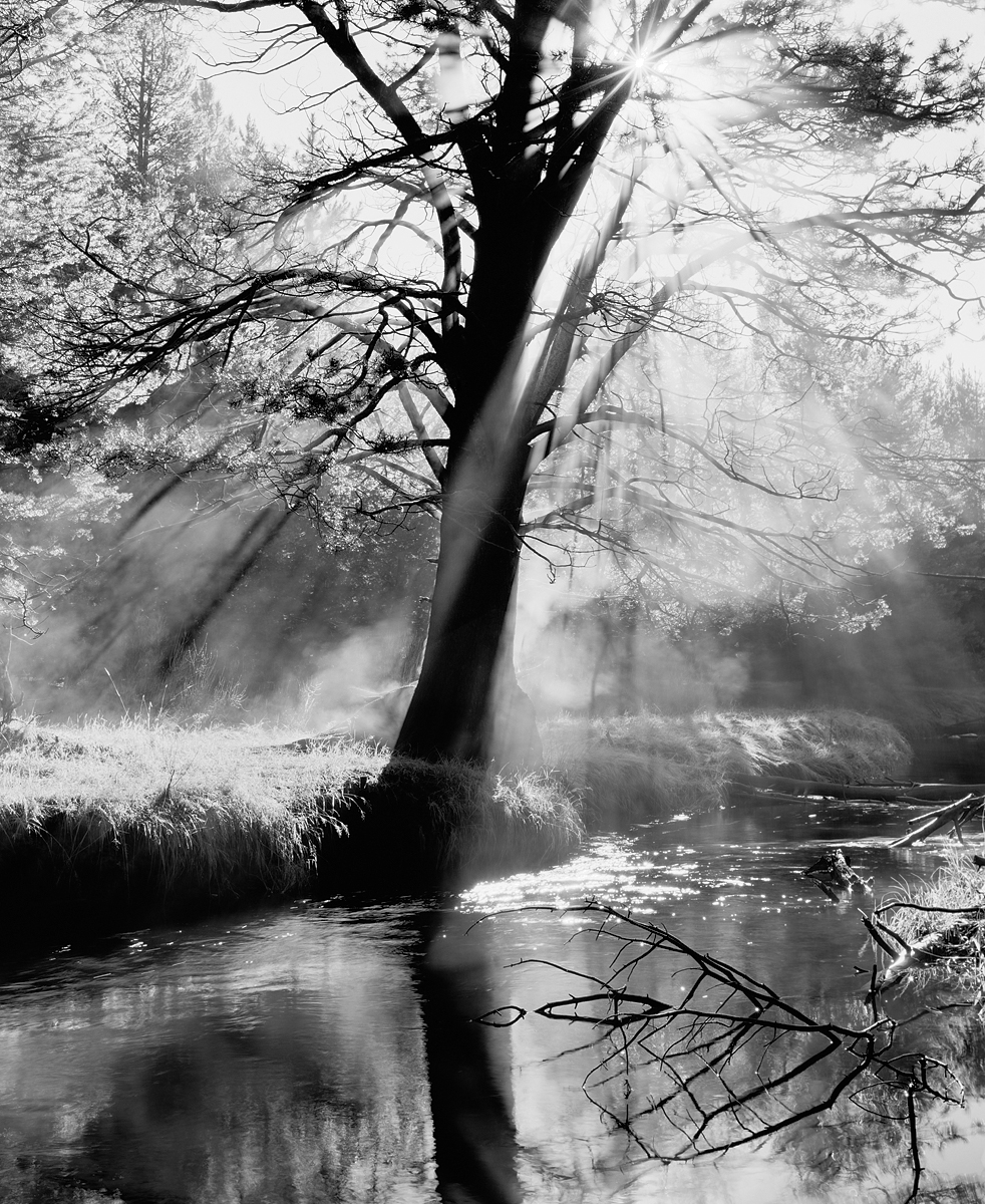 Steaming Tree, Light Rays and Reflections Black and White