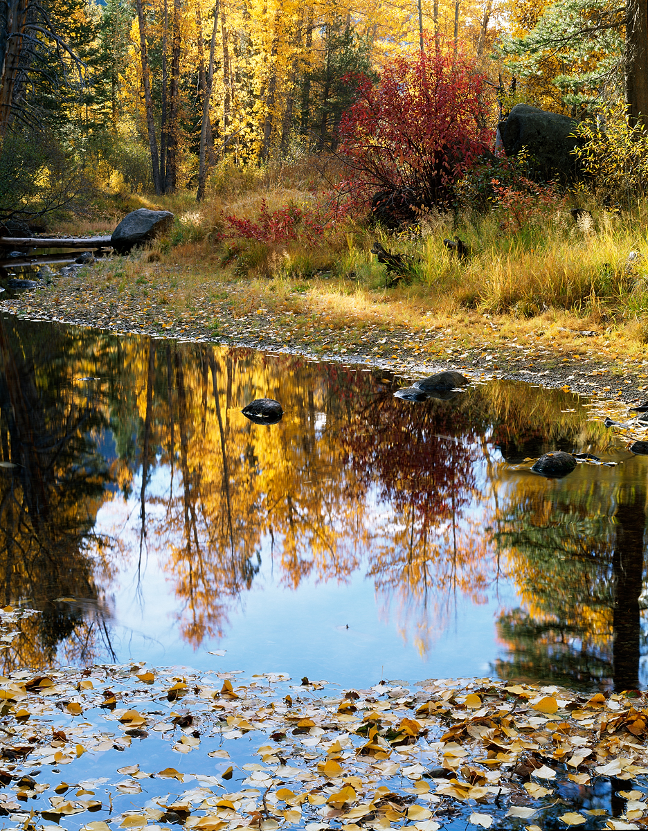 Fall Reflection, Upper Truckee River