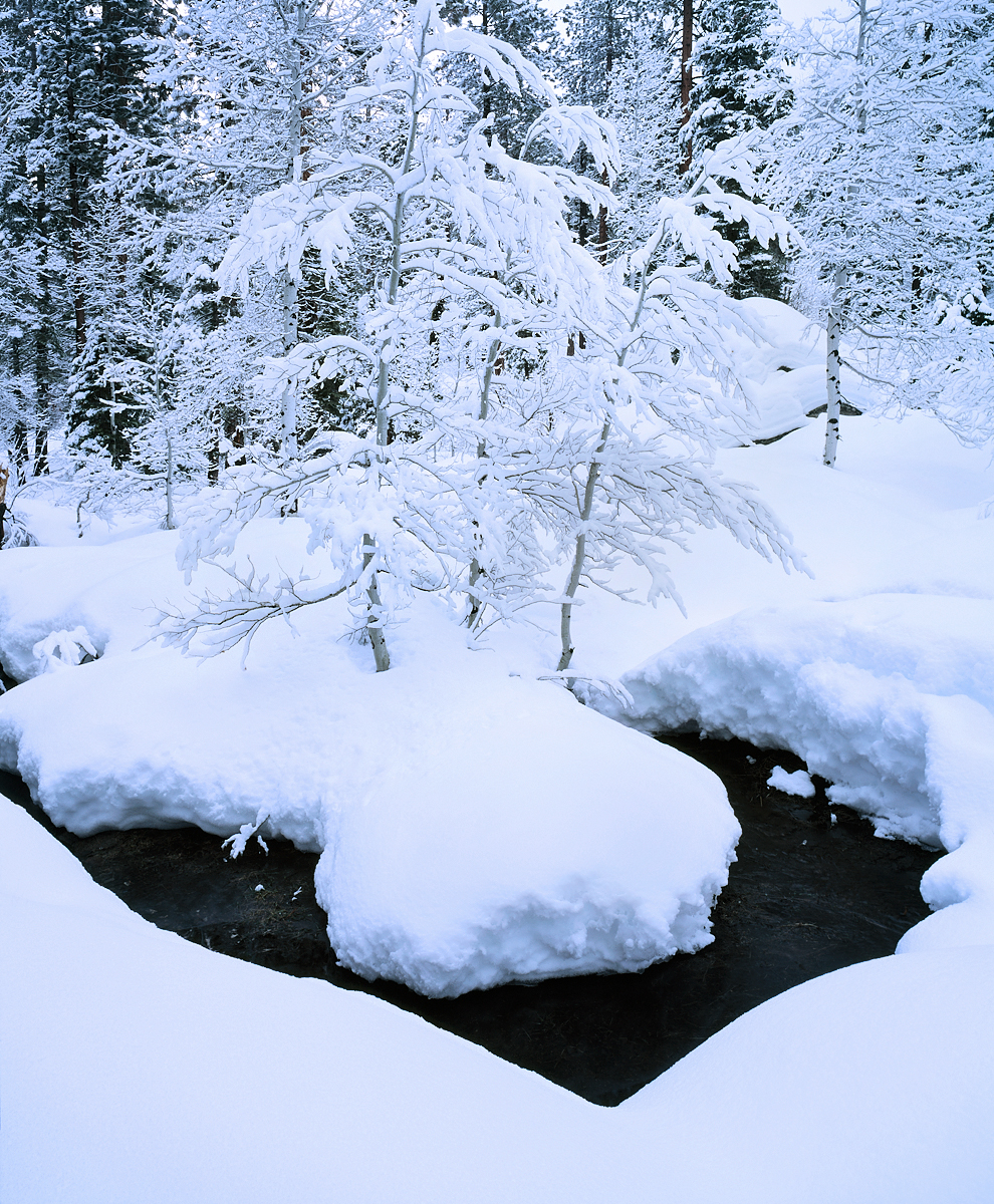 Three Aspens, Winter