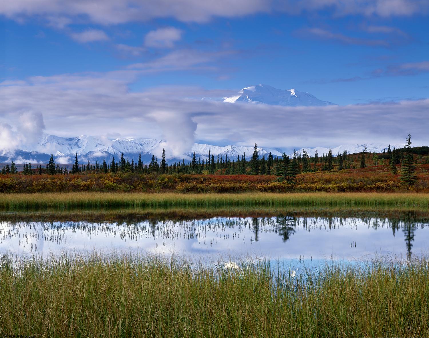 Morning, Grass and Pond, Denali