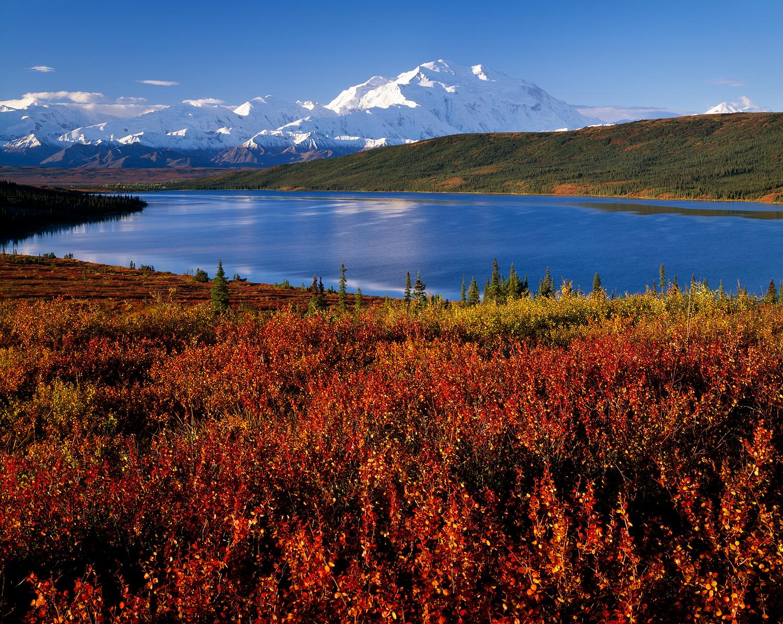 Blueberry Fall, Wonder Lake, Denali