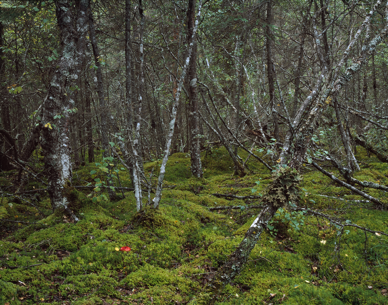 Moss and Forest Detail, Katmai, Alaska