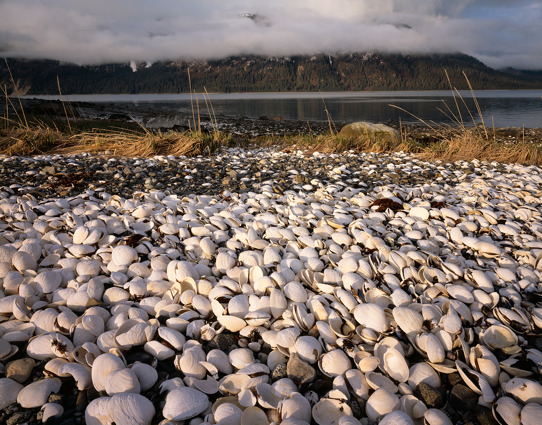 Clam Shells, Leland Island, Glacier Bay, Alaska