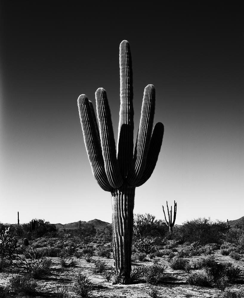 Saguaro VII Black & White, Arizona