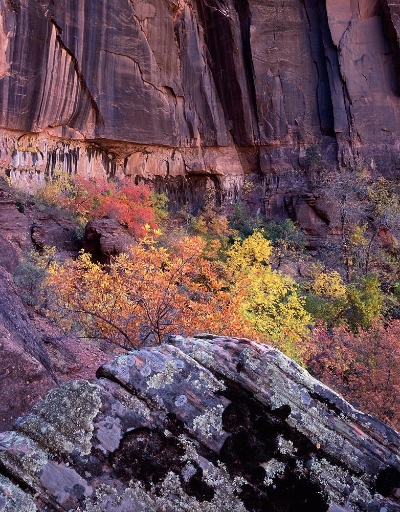 Colors of Zion, Zion National Park, Utah
