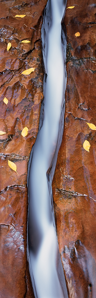 Earth's Blood, Zion National Park, Utah