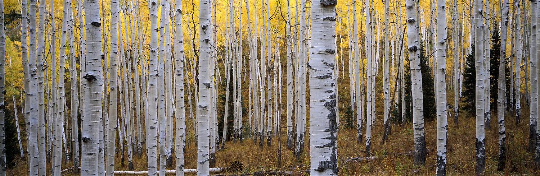 Aspen Dream, Colorado