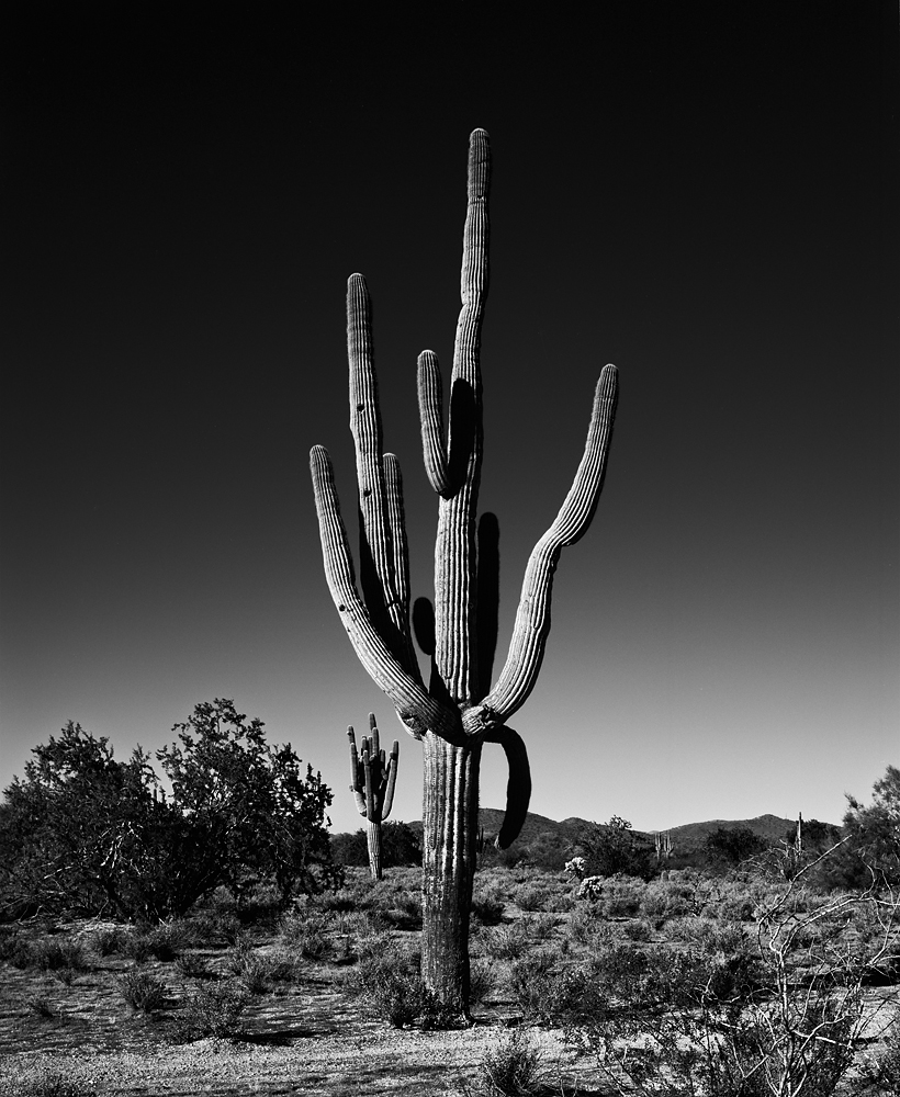 Saguaro I Black & White, Arizona