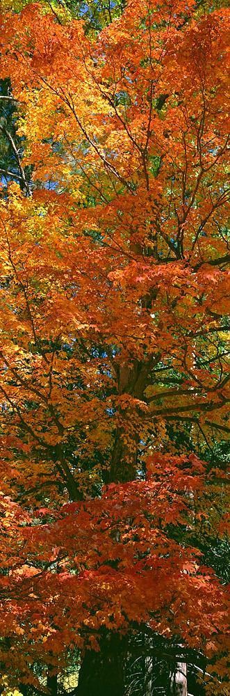 Autumn Riches, Yosemite Valley, California
