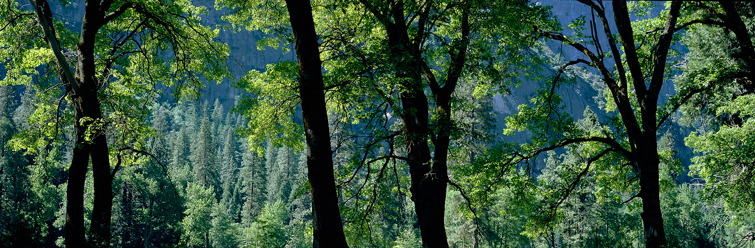 Oak Tree Silhouette, Yosemite Valley, California