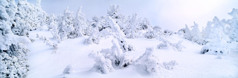 Snow Sculpture Panorama