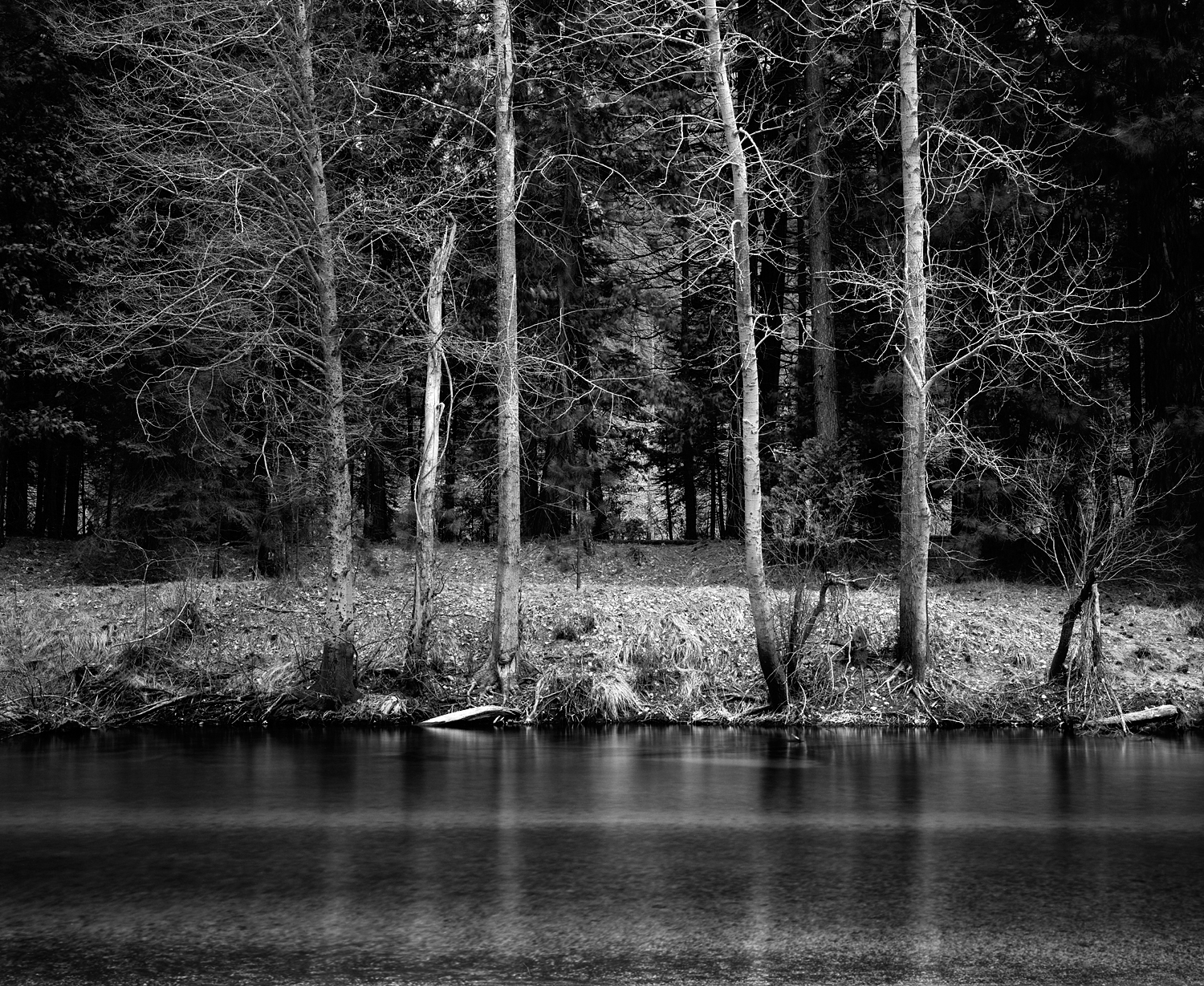 Trees on Merced River Black and White