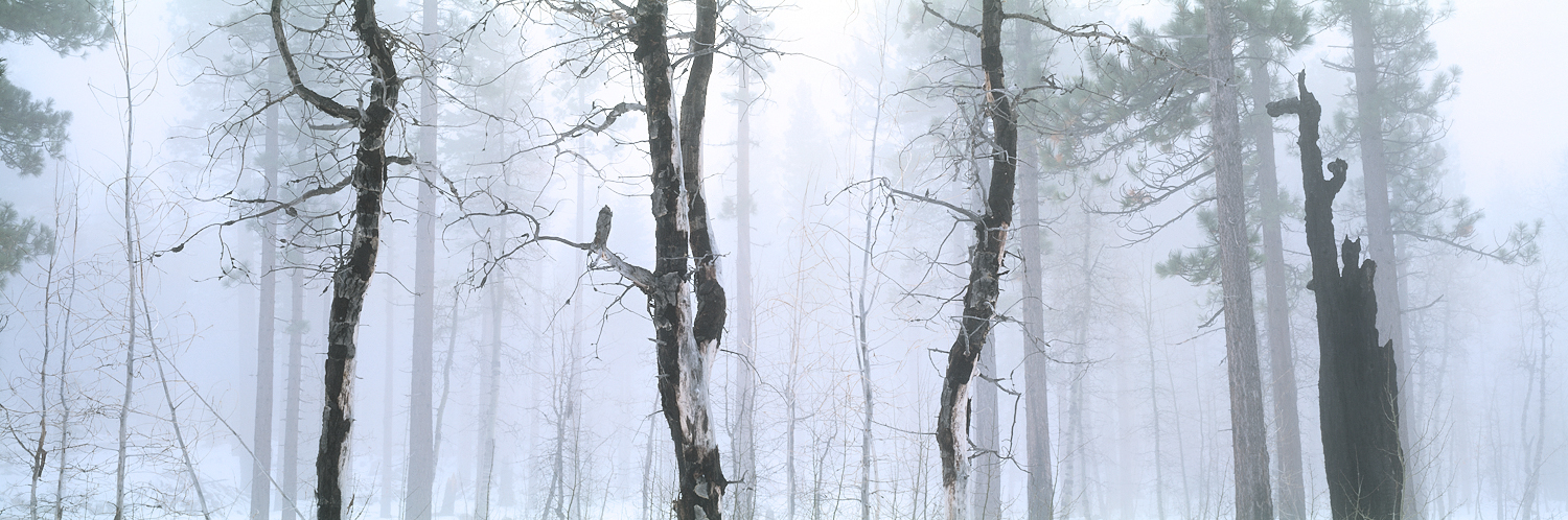 Foggy Forest Panorama, Lake Tahoe, USA